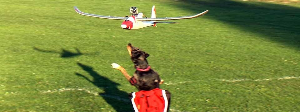 Dogs Chasing Plane